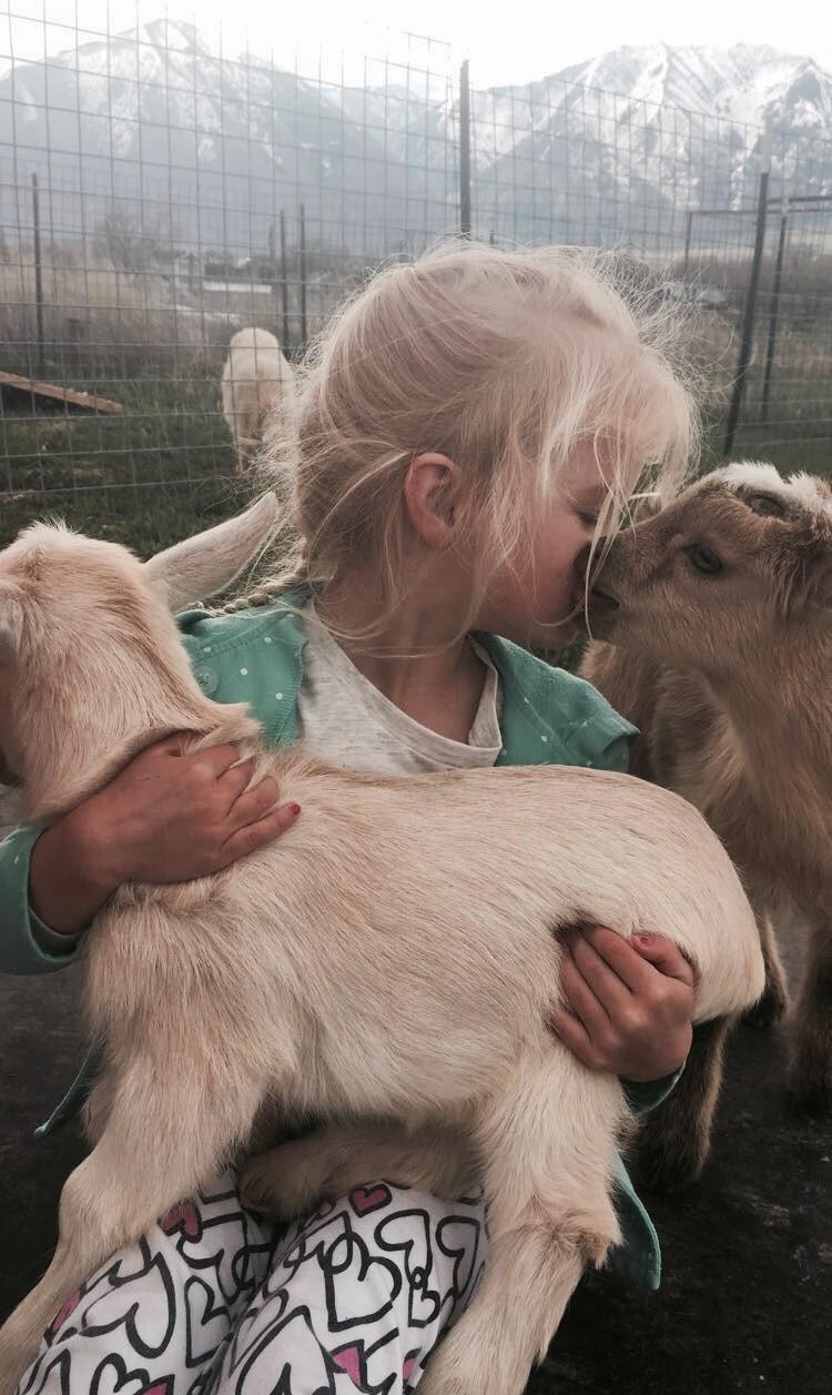 Goat Shenanigans